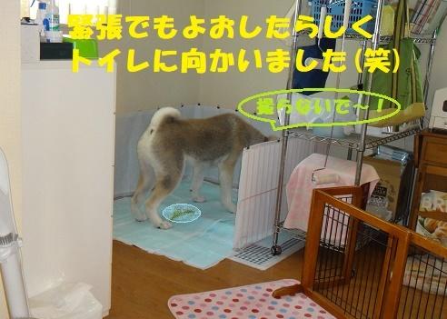 f0121712_01115648.jpg