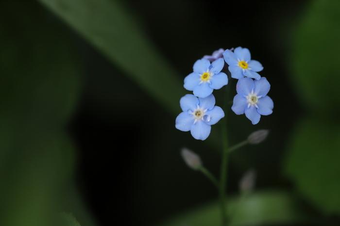 青い涙_e0169421_17351924.jpg