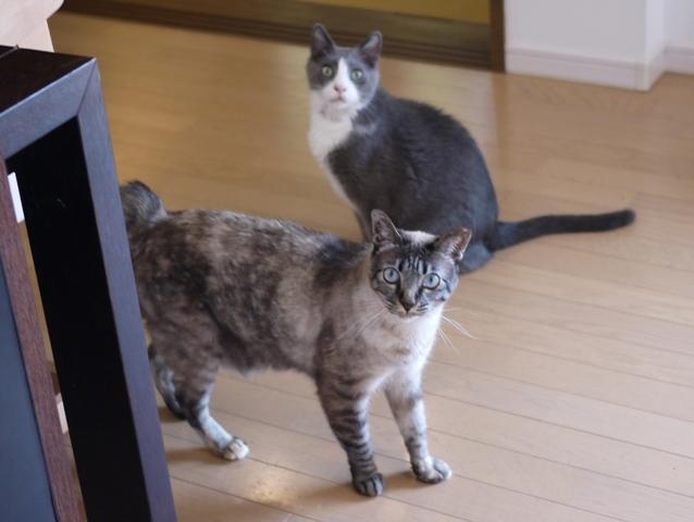 猫のお留守番 カン太くんルノーちゃん編。_a0143140_22214744.jpg