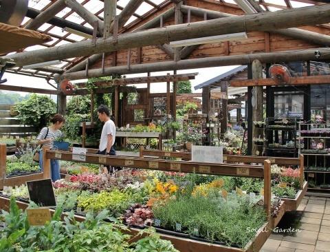◆泉南の有名な3つの園芸店巡り・・・『ロベリア』『金久』『リル・シュル・ラ・リング』_e0154682_22482958.jpg