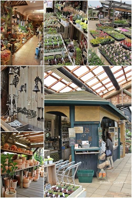 ◆泉南の有名な3つの園芸店巡り・・・『ロベリア』『金久』『リル・シュル・ラ・リング』_e0154682_23090894.jpg