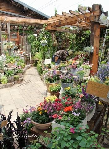 ◆泉南の有名な3つの園芸店巡り・・・『ロベリア』『金久』『リル・シュル・ラ・リング』_e0154682_23131535.jpg