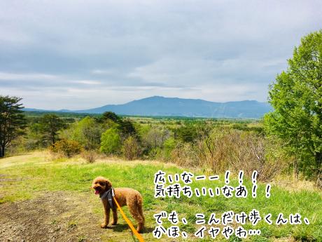軽井沢旅行。2日目。北軽井沢。_b0370192_05121588.jpg