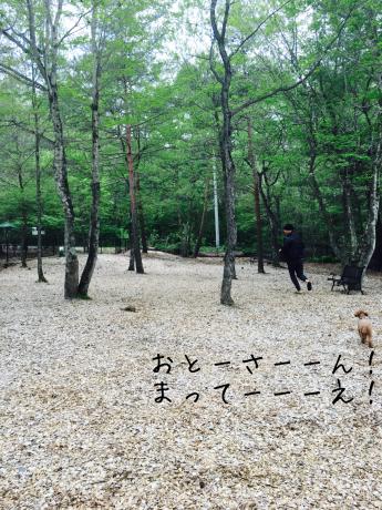 軽井沢旅行。2泊目ペンションリーブル。_b0370192_05253632.jpg