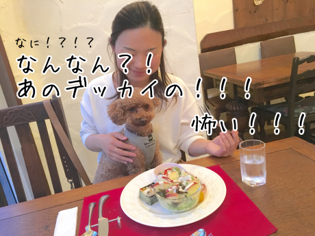 軽井沢旅行。2泊目ペンションリーブル。_b0370192_05320052.jpg