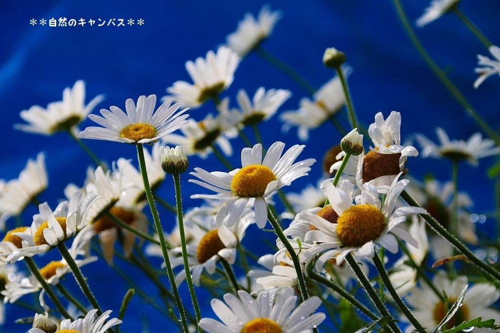 e0052135_15555214.jpg