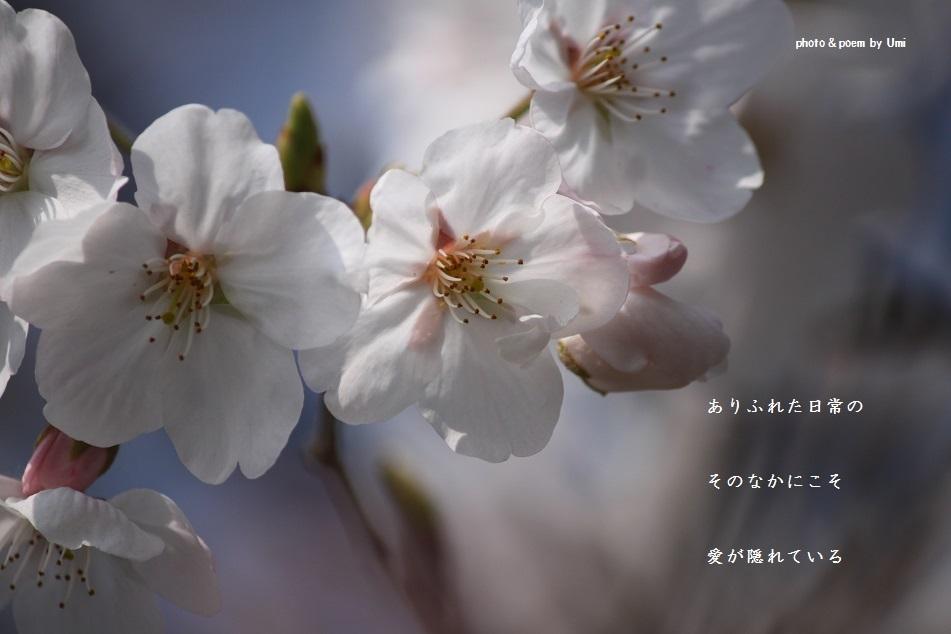 f0351844_13210168.jpg