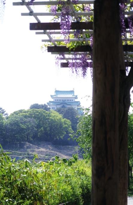 名古屋城と藤の花_e0348754_13365652.jpg