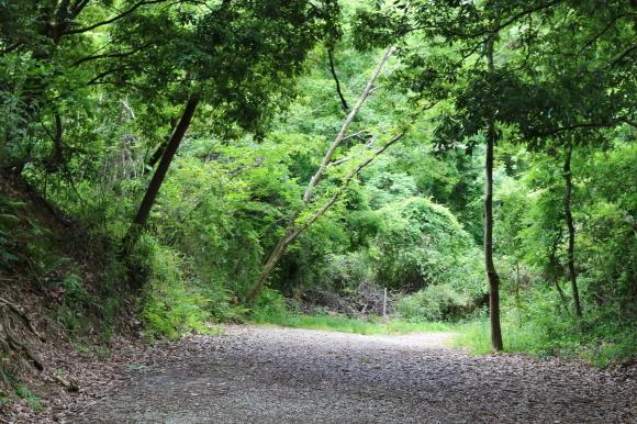 あやめ池商友会 再訪(奈良県奈良市)_c0001670_18121833.jpg