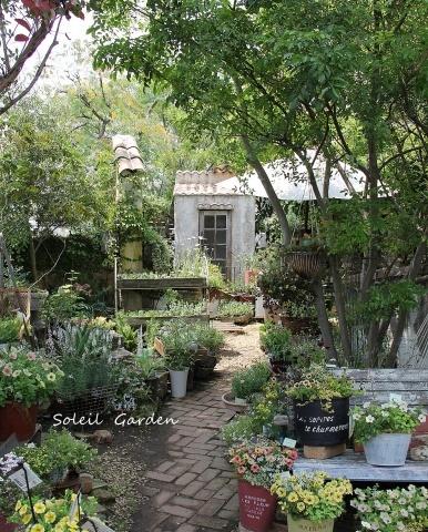 ◆泉南の有名な3つの園芸店巡り・・・『ロベリア』『金久』『リル・シュル・ラ・リング』_e0154682_00163480.jpg