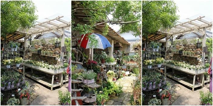 ◆泉南の有名な3つの園芸店巡り・・・『ロベリア』『金久』『リル・シュル・ラ・リング』_e0154682_00194151.jpg