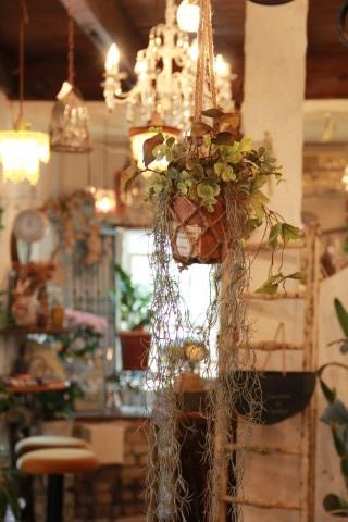 ◆泉南の有名な3つの園芸店巡り・・・『ロベリア』『金久』『リル・シュル・ラ・リング』_e0154682_01441383.jpg