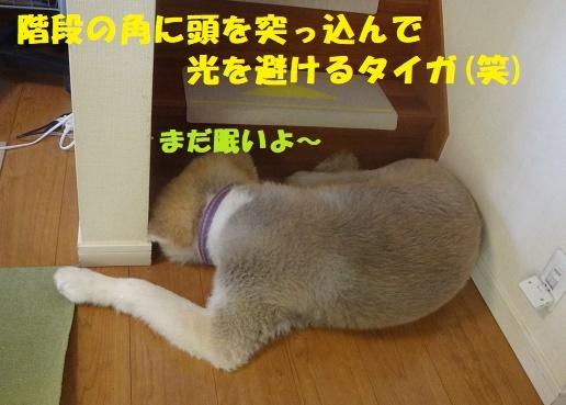 f0121712_08053169.jpg