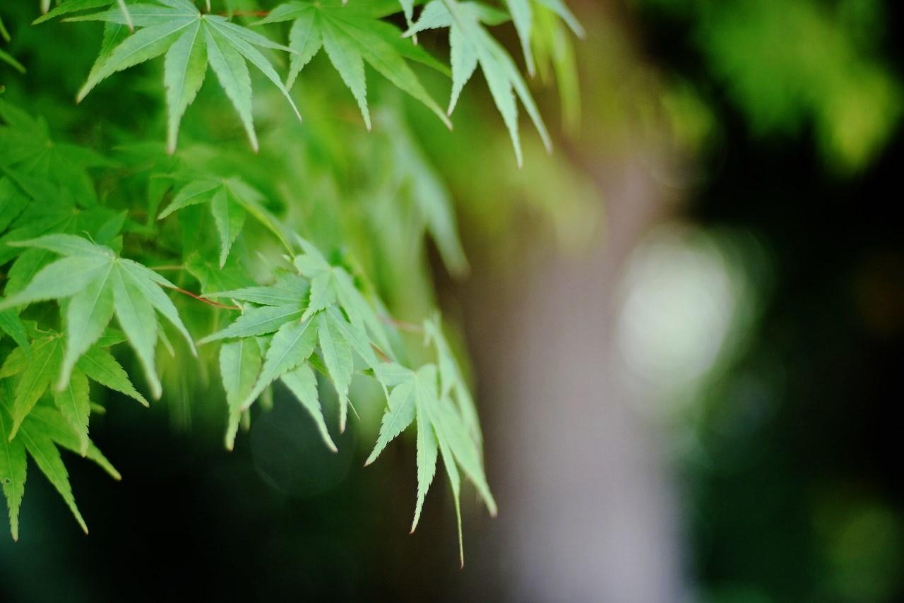 新緑かがやく円覚寺_d0065116_22023176.jpg