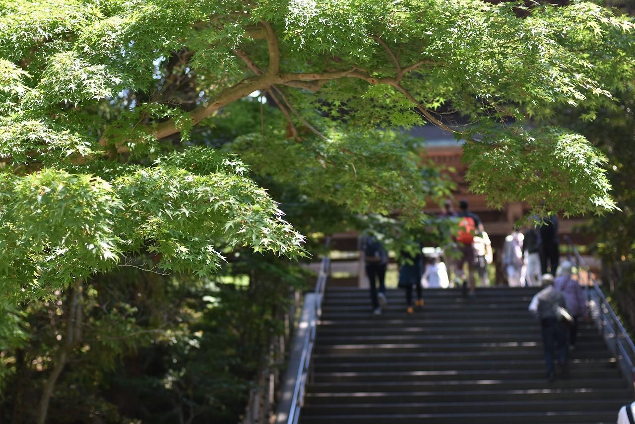 新緑かがやく円覚寺_d0065116_22033503.jpg