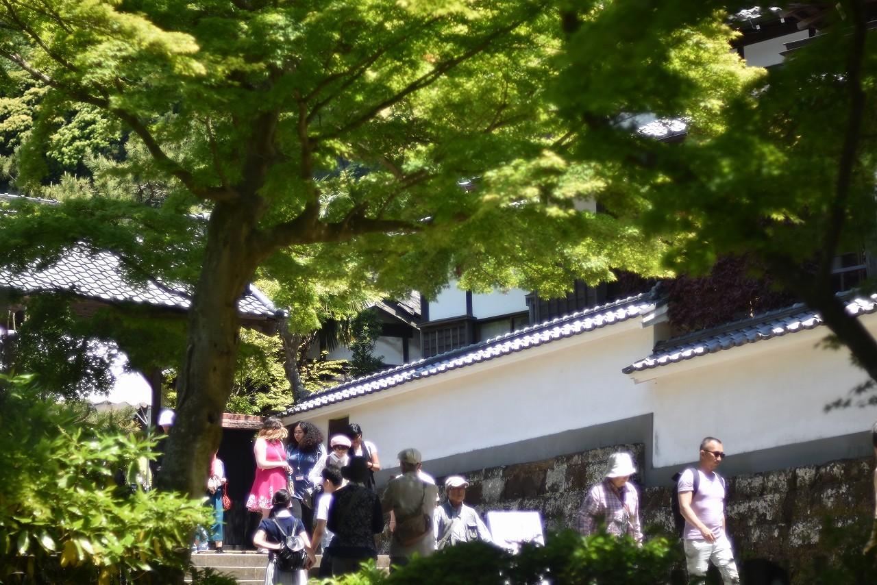 新緑かがやく円覚寺_d0065116_22050287.jpg
