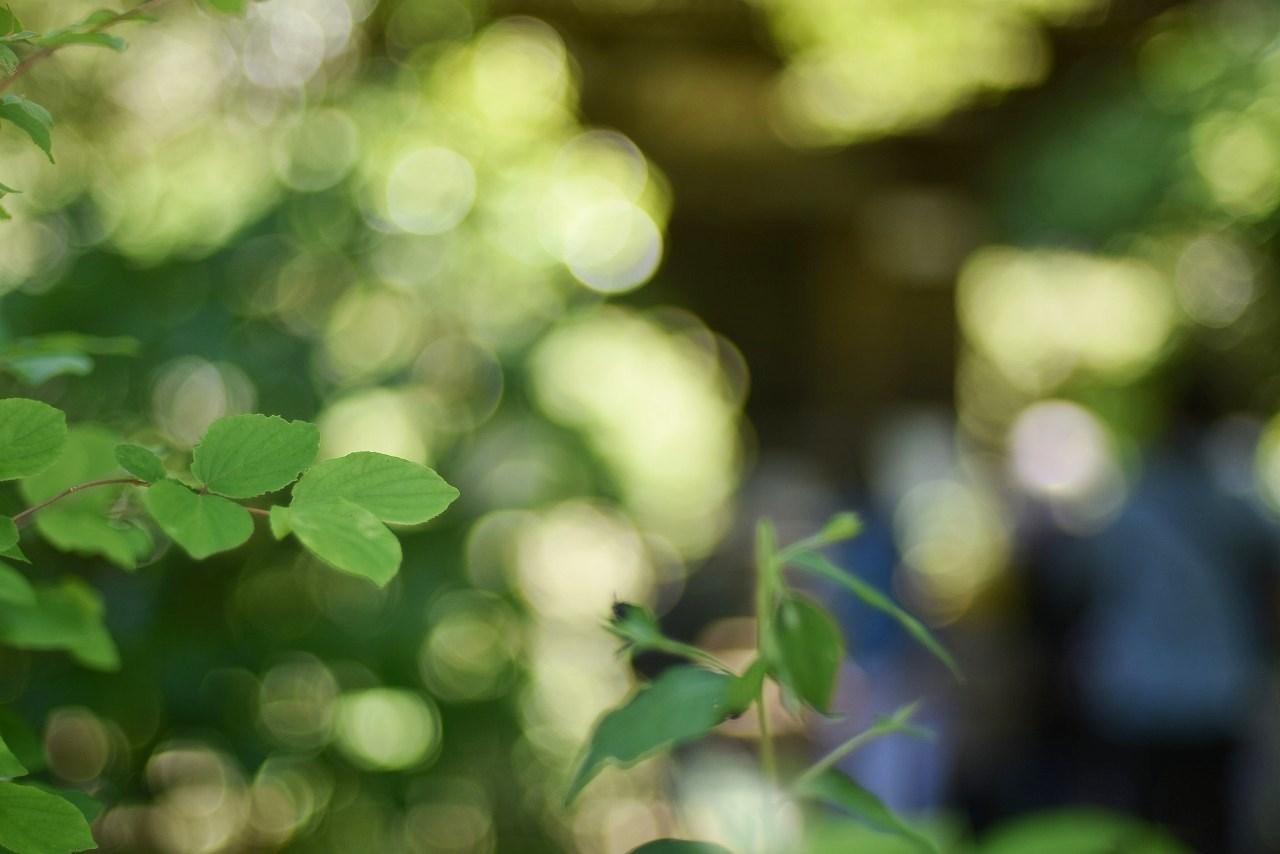 新緑かがやく円覚寺_d0065116_22113409.jpg