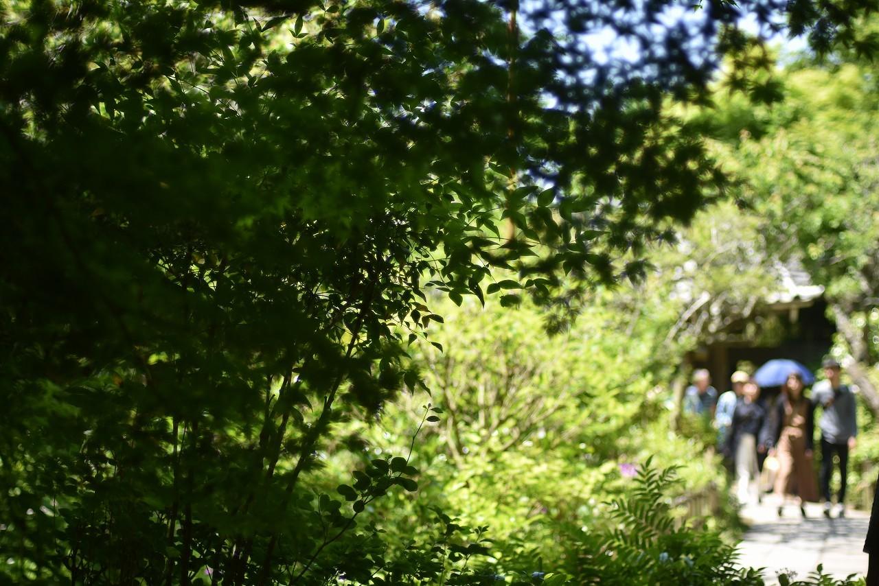 新緑かがやく円覚寺_d0065116_22115035.jpg