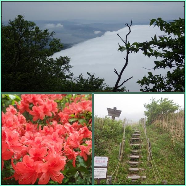 雲仙のミヤマキリシマ_e0164643_19511039.jpg