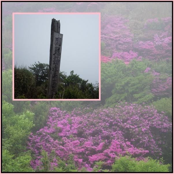 雲仙のミヤマキリシマ_e0164643_19524139.jpg