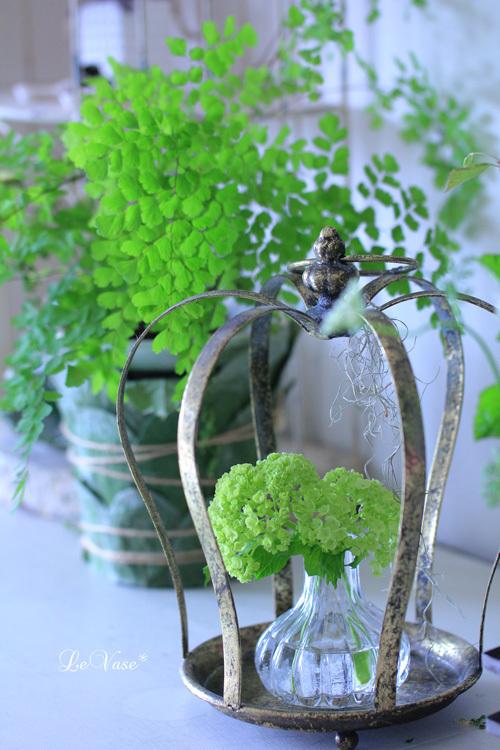 新緑の季節♪_e0158653_20444575.jpg