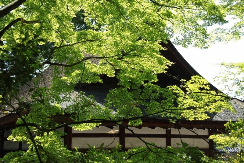 新緑の宇治神社_a0355356_22153265.jpg