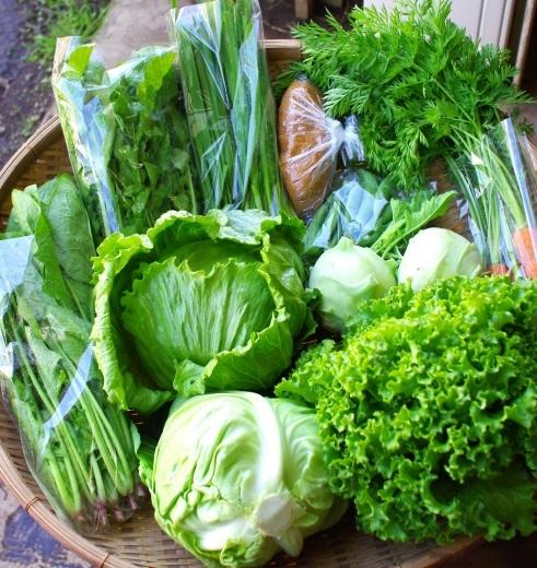 今週の野菜セット(5/22~5/26着)今シーズン初回です!_c0110869_12515117.jpg