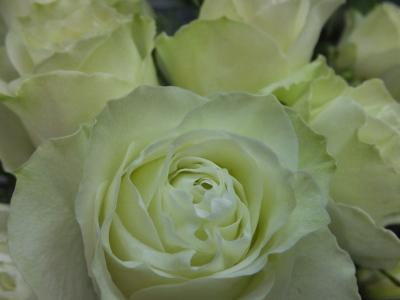 オークリーフ(5月のバラ)_f0049672_16080704.jpg