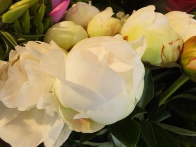 オークリーフ(5月のバラ)_f0049672_16091447.jpg