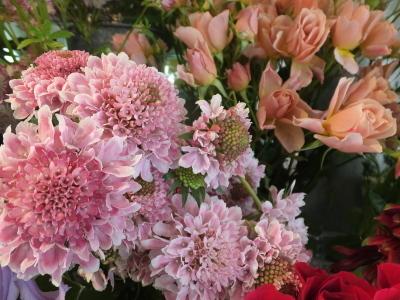 オークリーフ(5月のバラ)_f0049672_16102341.jpg