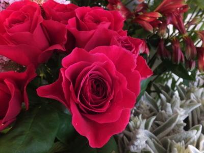 オークリーフ(5月のバラ)_f0049672_16103265.jpg