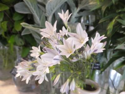 オークリーフ(5月のバラ)_f0049672_16105068.jpg