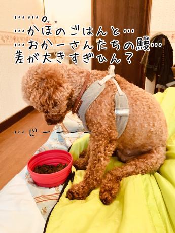 軽井沢旅行。最終日。_b0370192_21553963.jpg