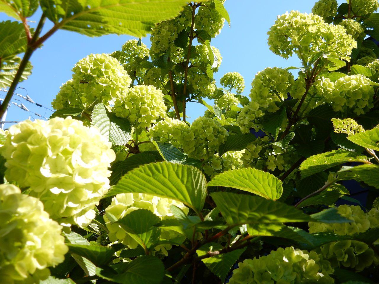 一気に夏日:一輪だけ咲いたシバザクラ_c0025115_22225304.jpg