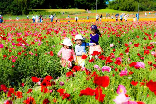 日本一のポピー畑_b0251929_00364183.jpg