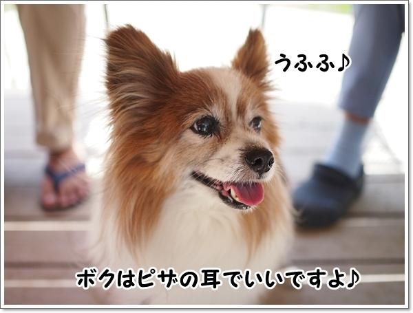 d0013149_00365761.jpg
