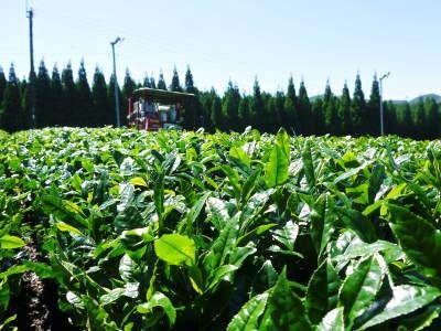 菊池水源茶 平成30年度の茶摘みの様子!まもなく新茶の販売開始です‼_a0254656_16070323.jpg