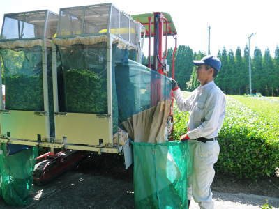 菊池水源茶 平成30年度の茶摘みの様子!まもなく新茶の販売開始です‼_a0254656_16162972.jpg