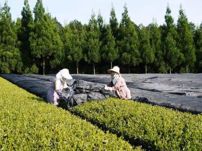 菊池水源茶 平成30年度の茶摘みの様子!まもなく新茶の販売開始です‼_a0254656_16345629.jpg