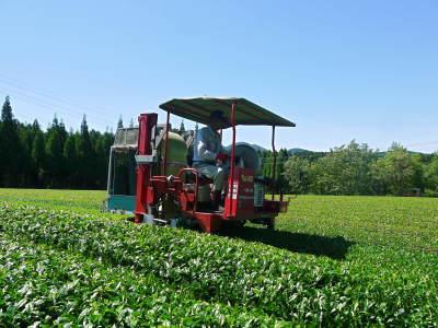 菊池水源茶 平成30年度の茶摘みの様子!まもなく新茶の販売開始です‼_a0254656_16510626.jpg