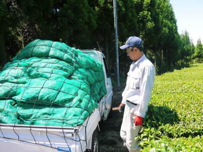 菊池水源茶 平成30年度の茶摘みの様子!まもなく新茶の販売開始です‼_a0254656_16542469.jpg