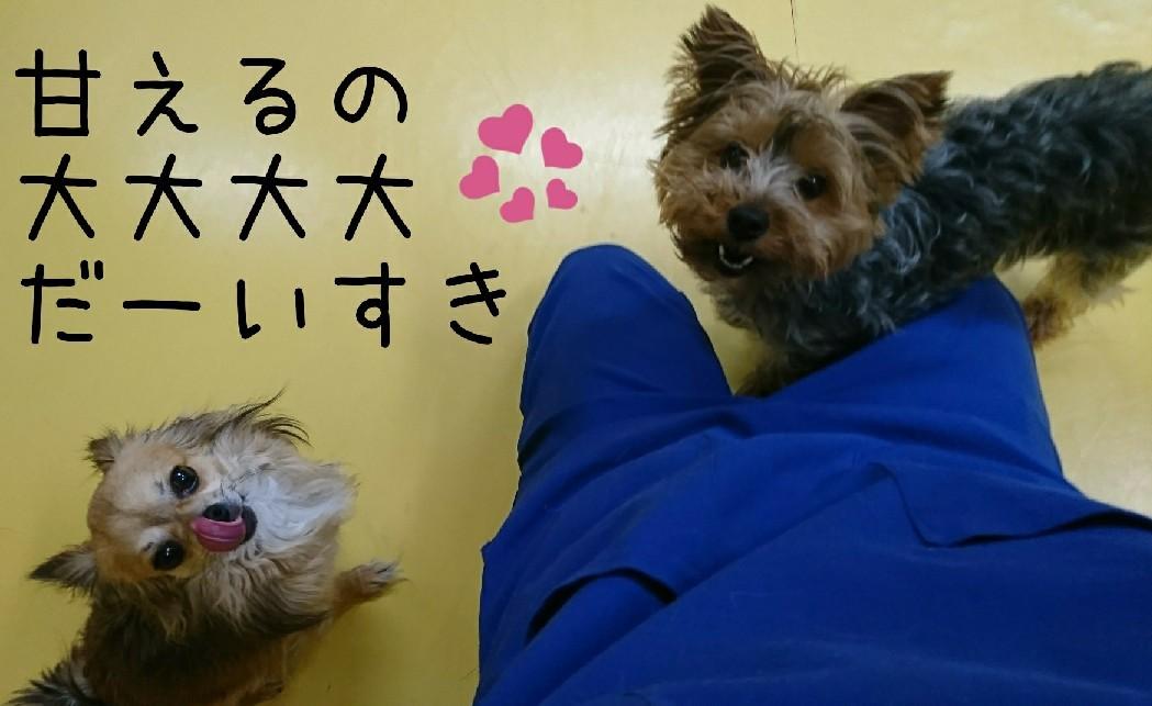 甘えん坊_f0357682_00270006.jpg