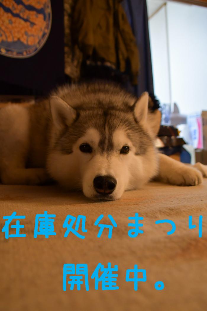 あああ、宮崎はきょうも雨だった~♪ (^_^;)_c0049299_21231922.jpg