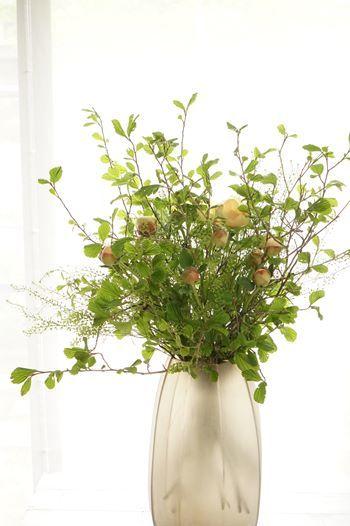 芍薬と牡丹が合わさると、まぁ美しいこと!!_b0151911_09435262.jpg