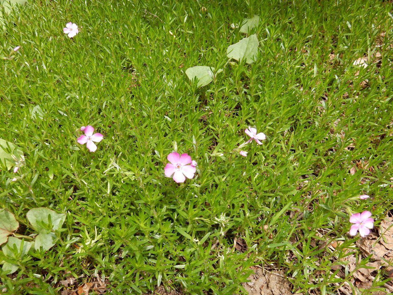 今年も春が来た_c0025115_22345883.jpg