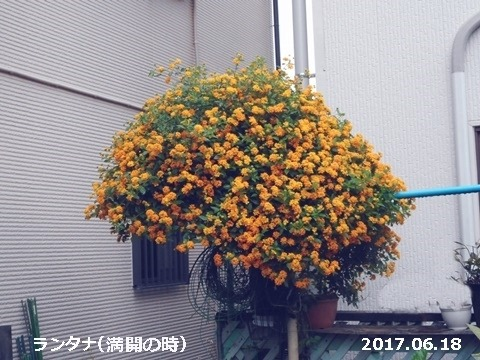 e0033229_17571688.jpg