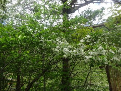 こなしの花咲く_f0219043_10383045.jpg