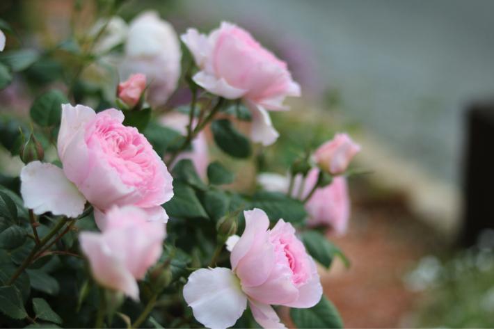 美しいカップ&ソーサー*ジエンシェントマリナー - my small garden~sugar plum~
