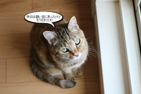 里親様募集開始してます、保護猫スコちゃん_e0151545_20490219.jpg