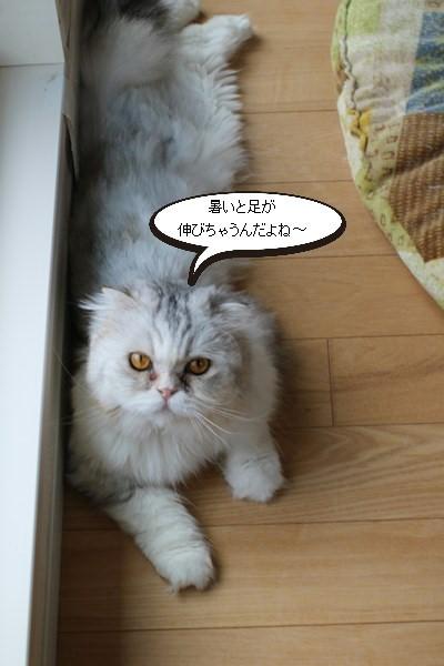 里親様募集開始してます、保護猫スコちゃん_e0151545_20494922.jpg